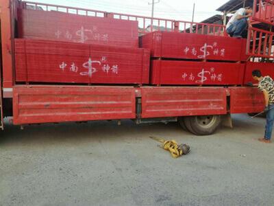 中南神箭竹胶板待发往广东梅州